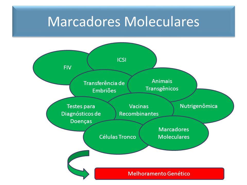 Nutrigenômica Marcadores Moleculares FIV ICSI Transferência de Embriões Animais Transgênicos Vacinas Recombinantes Testes para Diagnósticos de Doenças