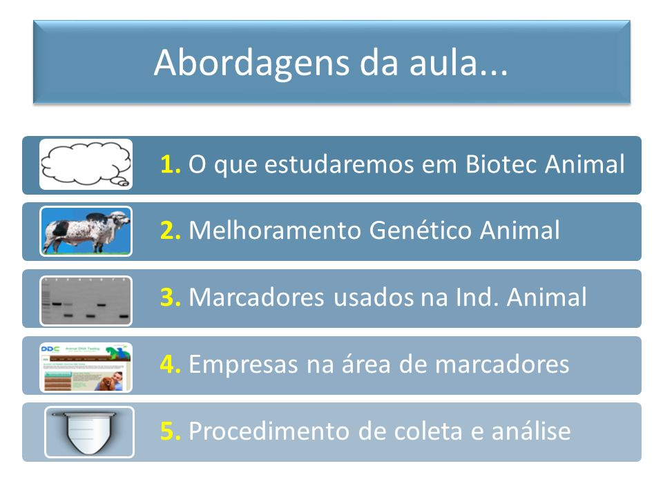 1. O que estudaremos em Biotec Animal 2. Melhoramento Genético Animal 3. Marcadores usados na Ind. Animal 4. Empresas na área de marcadores 5. Procedi