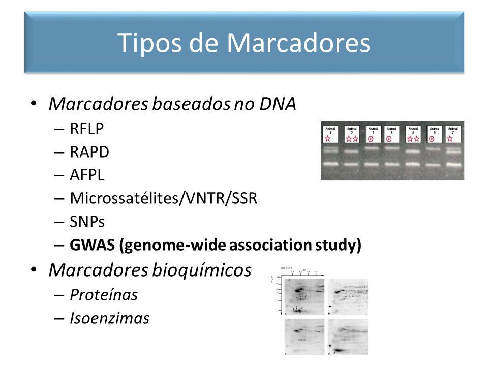 Marcadores baseados no DNA – RFLP – RAPD – AFPL – Microssatélites/VNTR/SSR – SNPs – GWAS (genome-wide association study) Marcadores bioquímicos – Prot