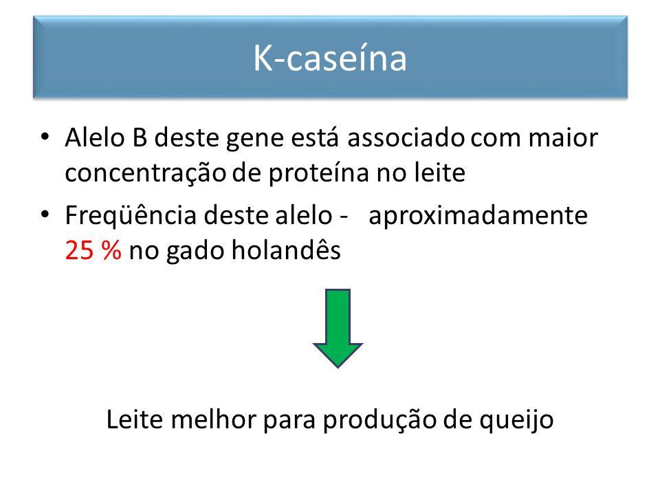Alelo B deste gene está associado com maior concentração de proteína no leite Freqüência deste alelo - aproximadamente 25 % no gado holandês Leite mel