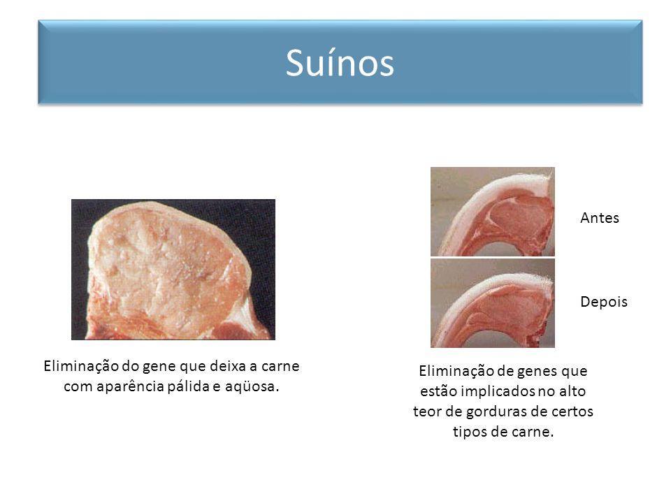 Eliminação do gene que deixa a carne com aparência pálida e aqüosa. Eliminação de genes que estão implicados no alto teor de gorduras de certos tipos