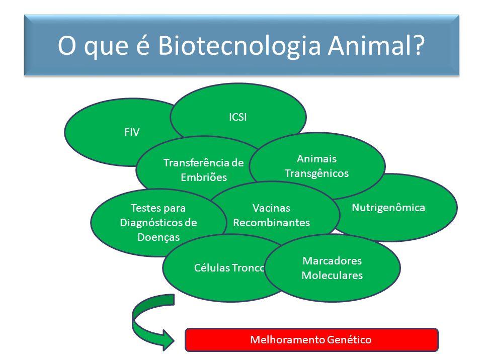 ÉpocaAtividade Século XXIAplicação dos marcadores moleculares às estratégias de IA, TE, FIV, Clonagem e principalmente Melhoramento Genético Início do século XXISexagem de embriões por análise de DNA (maior controle dos sistemas de criação) e clonagem (definição e propagação do animal ideal para a cadeia produtiva) Década de 90Produção de embriões in vitro (influência do macho e da fêmea potencializados) Década de 80Programas de melhoramento baseados em ferramentas estatísticas (maior influência da dinâmica populacional e interação com o meio ambiente) Década de 70Transferência de embriões (maior influência da fêmea) Década de 60Inseminação artificial (maior influência do macho) Desde 1500Importações oficiais e extra-oficiais de animais vivos O que é Biotecnologia Animal.