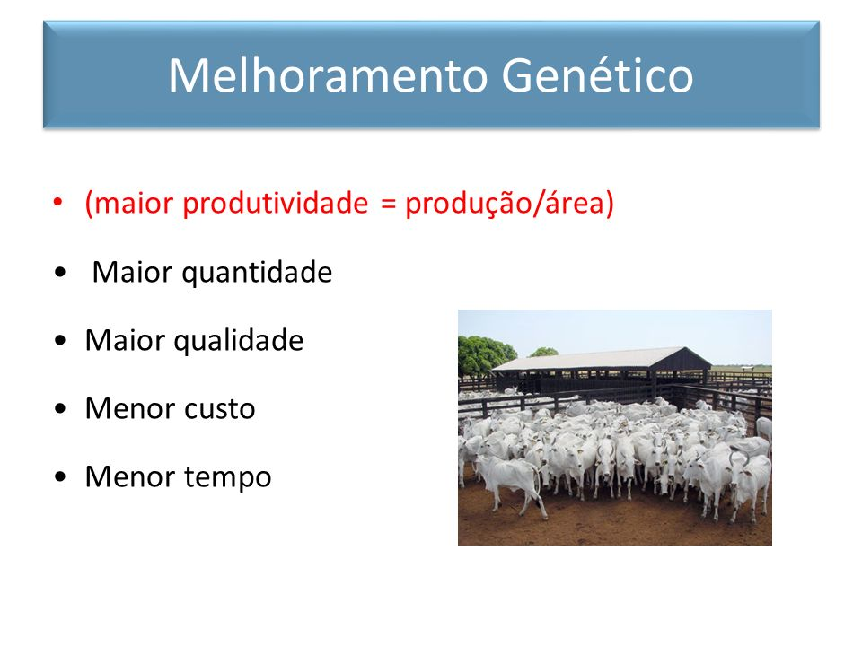 Mudanças genéticas graduais (porém dramáticas) obtidas em grande período de tempo (100 anos) pela observação de acasalamento seletivo Métodos Tradicionais de Melhoramento