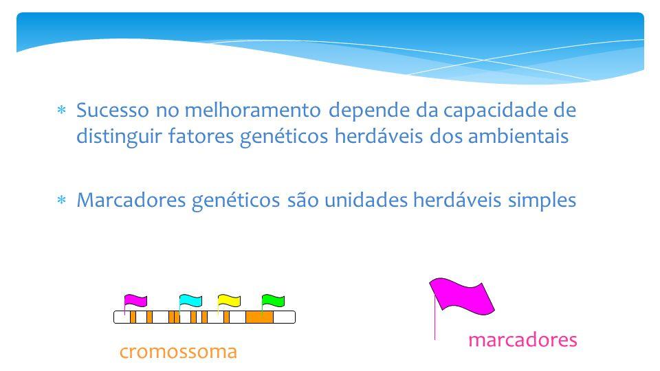 Sucesso no melhoramento depende da capacidade de distinguir fatores genéticos herdáveis dos ambientais Marcadores genéticos são unidades herdáveis simples marcadores cromossoma