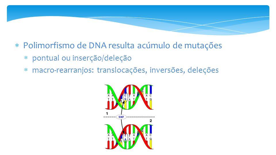 1.Mutações pontuais – SNPs A.ATCTCGTGATTCCTAGTCGTA TAGAGCACTAAGGGATCAGCAT ex.