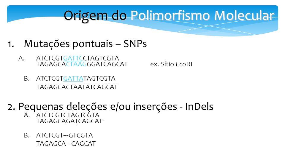 1.Mutações pontuais – SNPs A.ATCTCGTGATTCCTAGTCGTA TAGAGCACTAAGGGATCAGCAT ex. Sítio EcoRI B.ATCTCGTGATTATAGTCGTA TAGAGCACTAATATCAGCAT 2. Pequenas dele