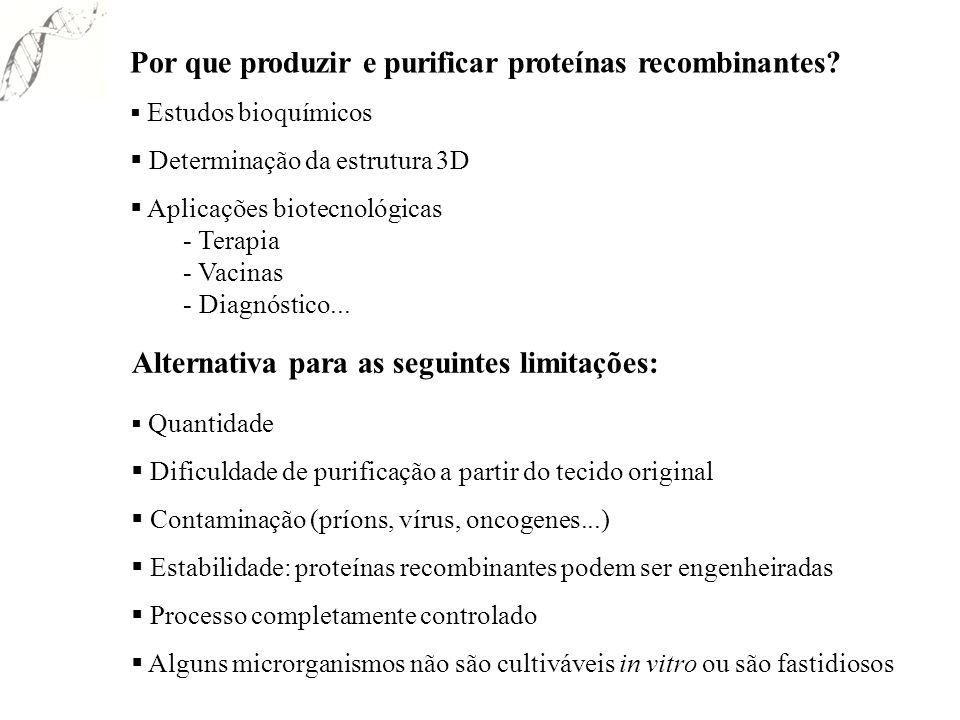 Pichia pastoris Desvantagens Proteólise de proteínas secretadas Poucos vetores disponíveis (Invitrogen) Necessita o uso de fermentadores para atingir alta densidade celular – no entanto não realiza fermentação.
