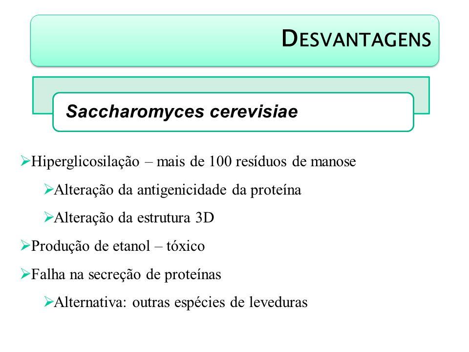 D ESVANTAGENS Saccharomyces cerevisiae Hiperglicosilação – mais de 100 resíduos de manose Alteração da antigenicidade da proteína Alteração da estrutu