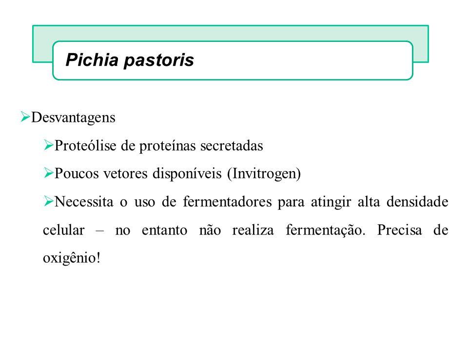 Pichia pastoris Desvantagens Proteólise de proteínas secretadas Poucos vetores disponíveis (Invitrogen) Necessita o uso de fermentadores para atingir