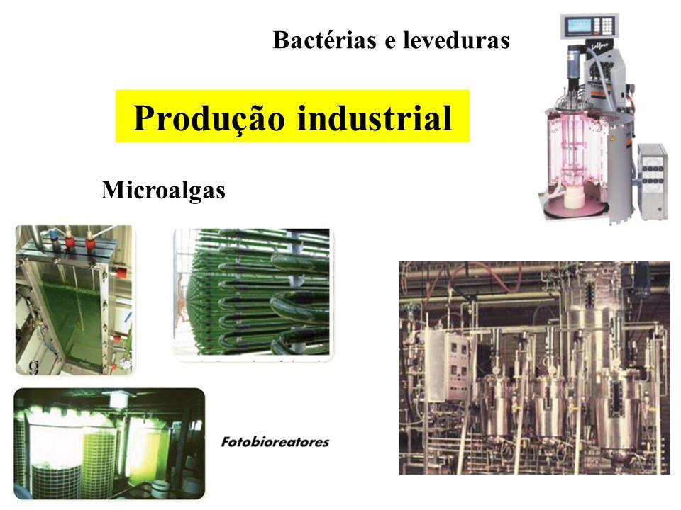 Bactérias e leveduras Microalgas Produção industrial