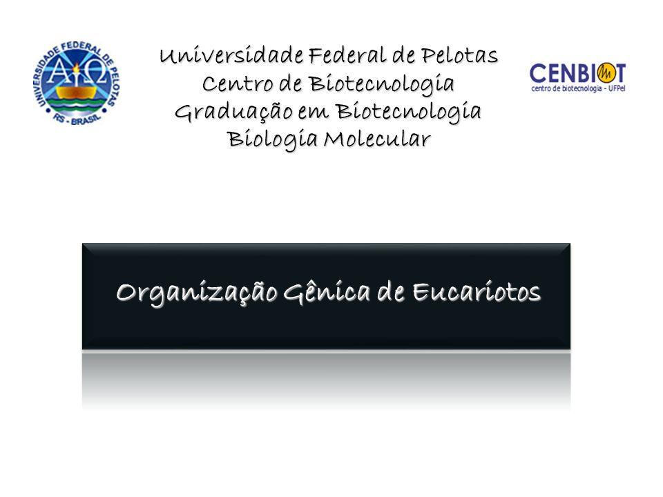 Universidade Federal de Pelotas Centro de Biotecnologia Graduação em Biotecnologia Biologia Molecular Organização Gênica de Eucariotos