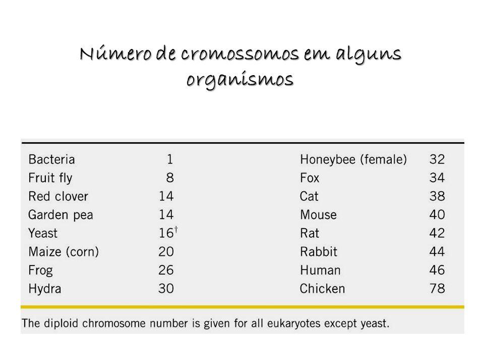 Número de cromossomos em alguns organismos