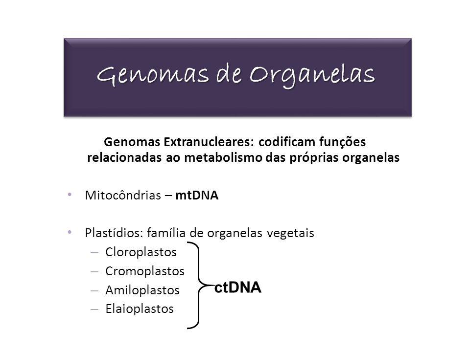 Genomas de Organelas Genomas Extranucleares: codificam funções relacionadas ao metabolismo das próprias organelas Mitocôndrias – mtDNA Plastídios: fam