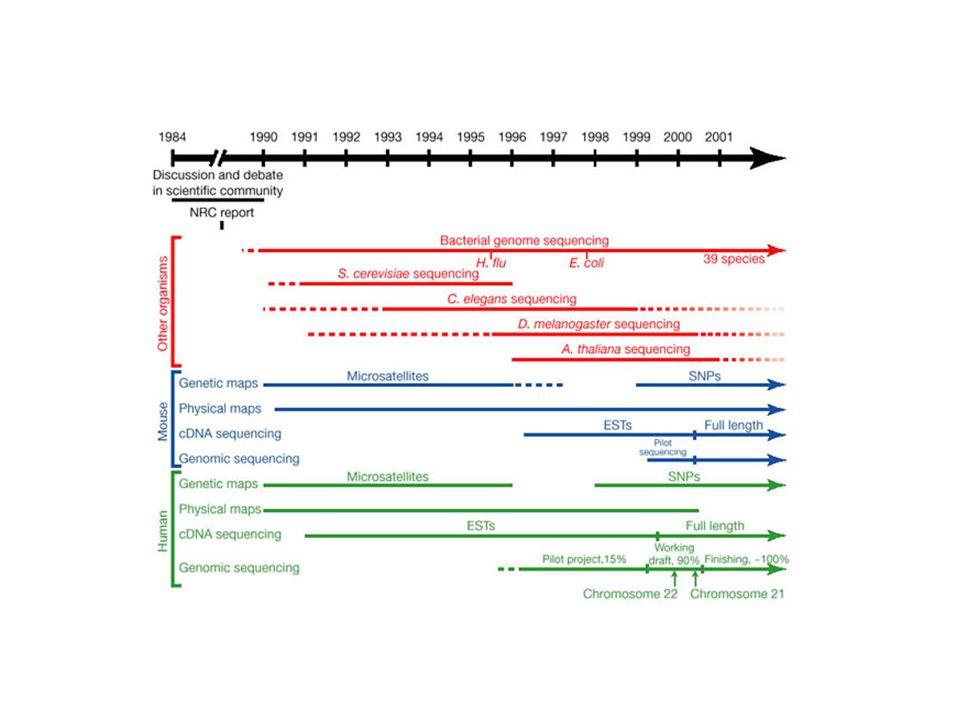 determinar a sequencia completa de nucleotídeos do genoma humano