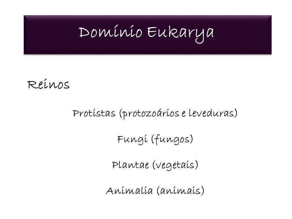 Domínio Eukarya Reinos Protistas (protozoários e leveduras) Fungi (fungos) Plantae (vegetais) Animalia (animais)