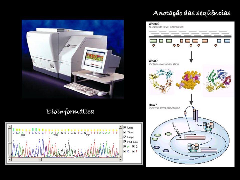 Bioinformática Anotação das seqüências