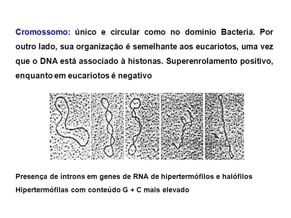 BacteriaArchaeaEukarya CariotecaNão Sim Nucleossomos/histonasNãoSIm Operons/RNAm policistrônicos SIm Não IntronsNão SIm proteína de ligação à TATA box NãoSIm OrganelasNão SIm CromossomosUm, circular Mais que um, linear RNA polimeraseUma, simples Mais que uma, complexas Aminoácido de iniciação protéica N-formil metioninaMetionina Sensibilidade da síntese de proteína à toxina diftérica InsensívelSensível PeptoglicanoSimNão Síntese de proteína fatores de iniciação proteínas ribossômicas fatores de alongamento Archaea é mais semelhante à Eukarya do que à Bacteria
