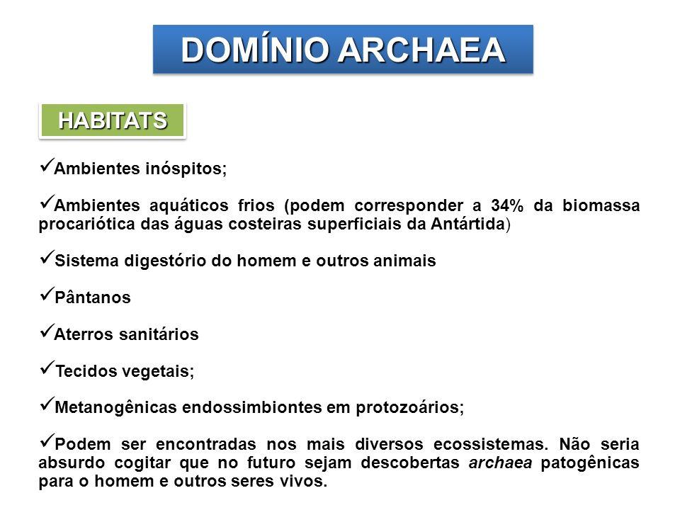 CLASSIFICAÇÃO FILOGENÉTICA Três filos: Crenarchaeota, Euryarchaeota e Korarchaeota
