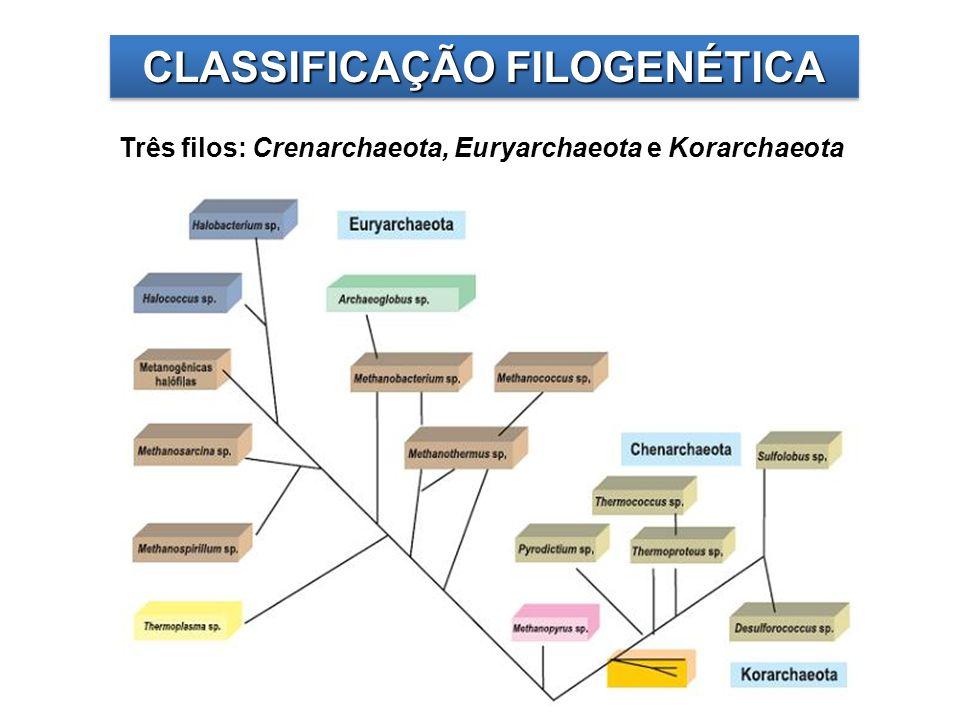 Crenarchaeota é composto por organismos hipertermófilos, como Thermoproteus, Pyrolobus e Pyrodictium.