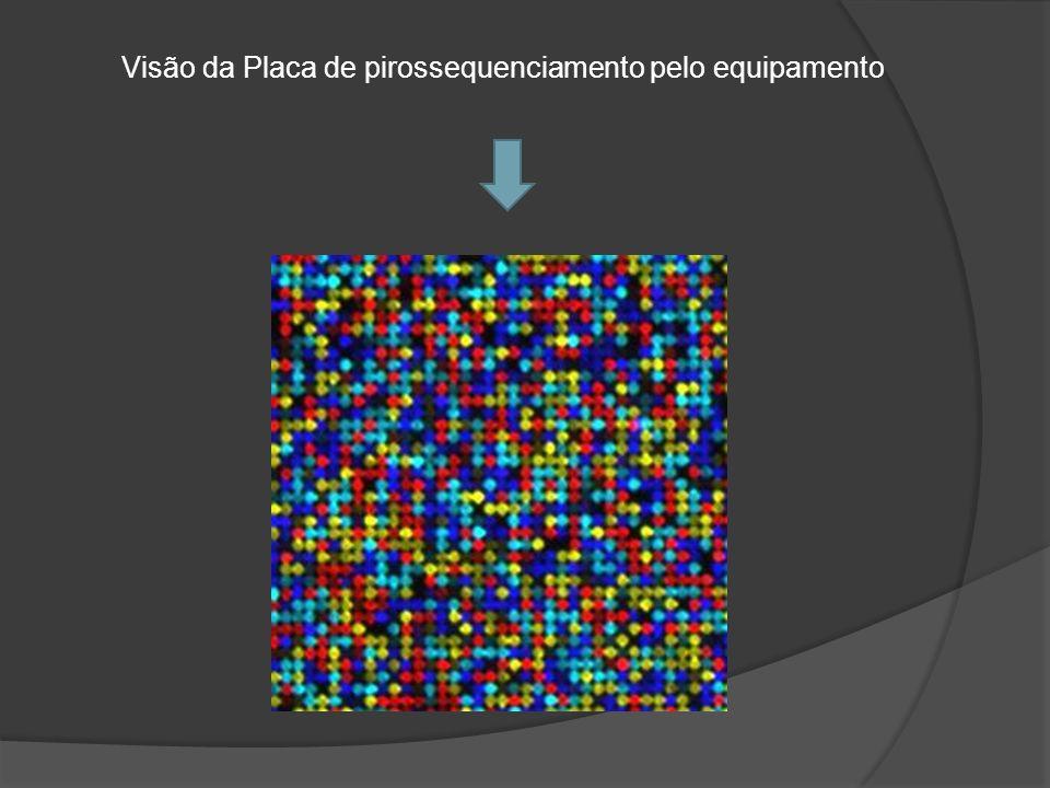 Visão da Placa de pirossequenciamento pelo equipamento