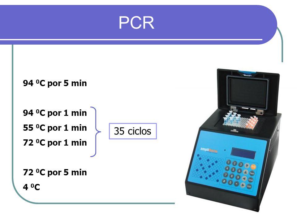 PCR 94 0 C por 5 min 94 0 C por 1 min 55 0 C por 1 min 72 0 C por 1 min 72 0 C por 5 min 4 0 C 35 ciclos