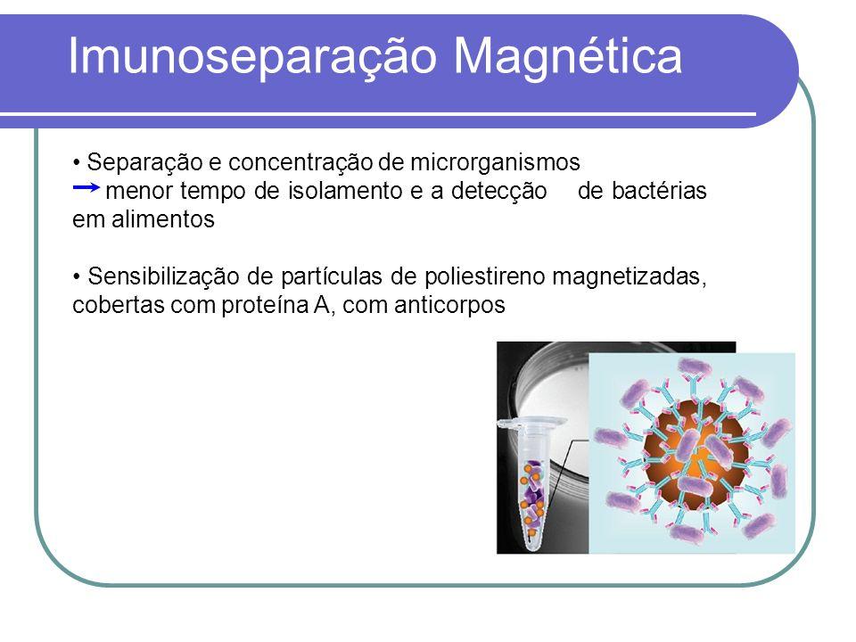 Separação e concentração de microrganismos menor tempo de isolamento e a detecção de bactérias em alimentos Sensibilização de partículas de poliestireno magnetizadas, cobertas com proteína A, com anticorpos Imunoseparação Magnética
