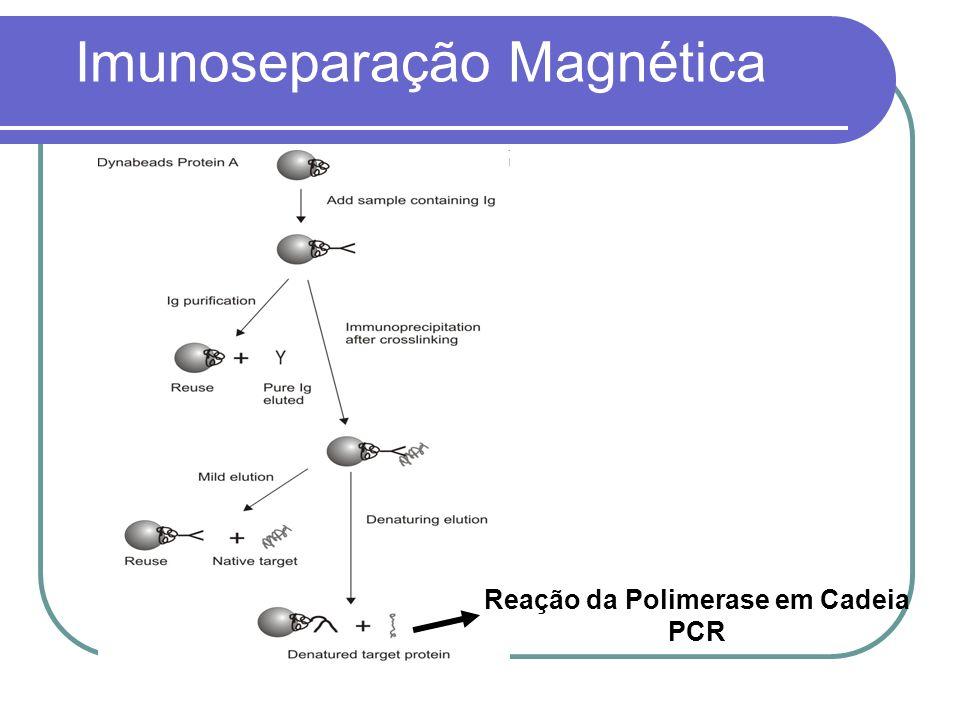 Reação da Polimerase em Cadeia PCR