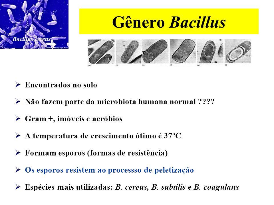 Gênero Bifidobacterium Fazem parte da microbiota humana normal (vagina e intestino grosso) Possuem uma boa resistência à acidez gástrica e aos sais bi