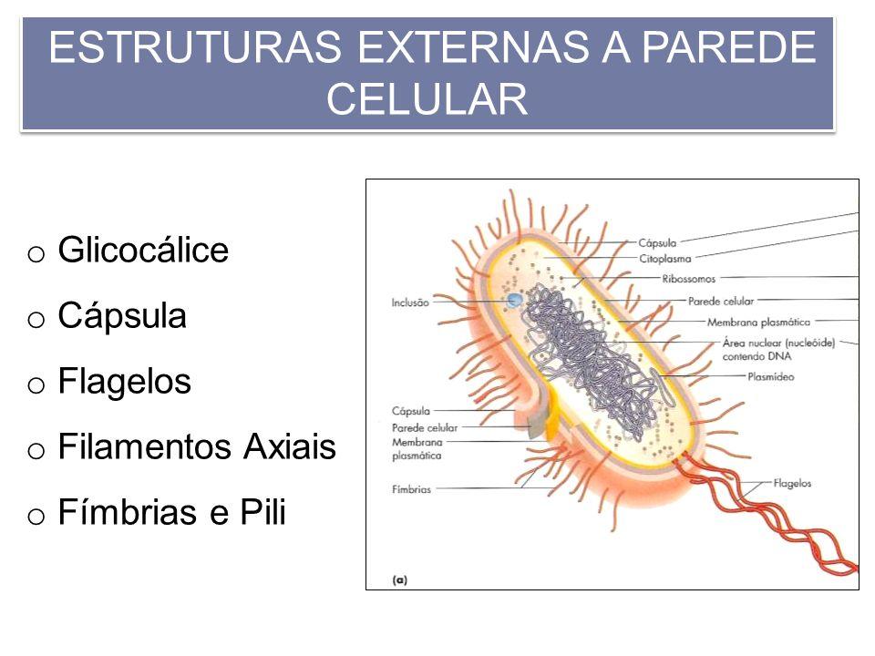 ESTRUTURAS EXTERNAS A PAREDE CELULAR o Glicocálice o Cápsula o Flagelos o Filamentos Axiais o Fímbrias e Pili