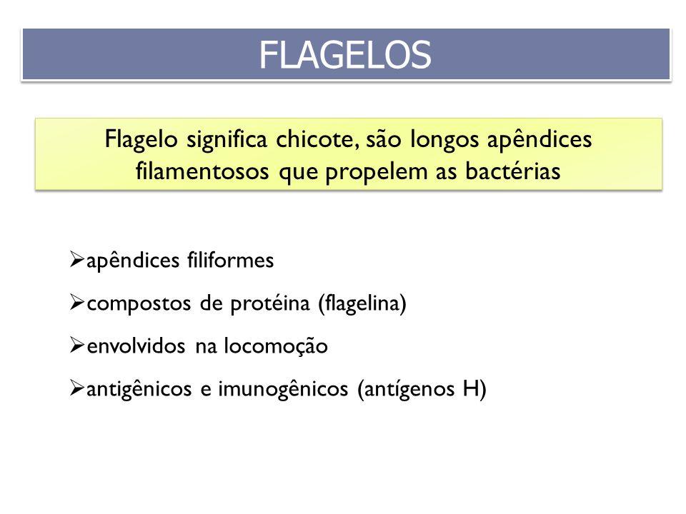 apêndices filiformes compostos de protéina (flagelina) envolvidos na locomoção antigênicos e imunogênicos (antígenos H) Flagelo significa chicote, são