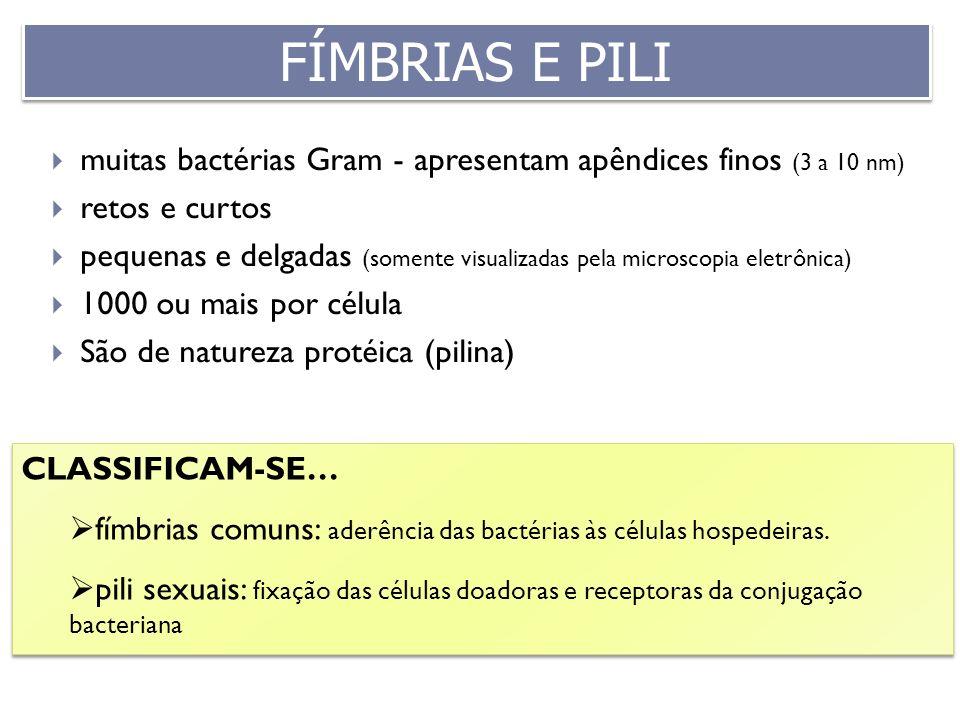 CLASSIFICAM-SE… fímbrias comuns: aderência das bactérias às células hospedeiras. pili sexuais: fixação das células doadoras e receptoras da conjugação