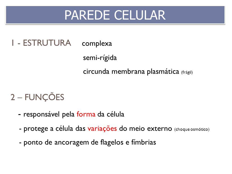 1 - ESTRUTURA complexa semi-rígida circunda membrana plasmática (frágil) 2 – FUNÇÕES - responsável pela forma da célula - protege a célula das variaçõ