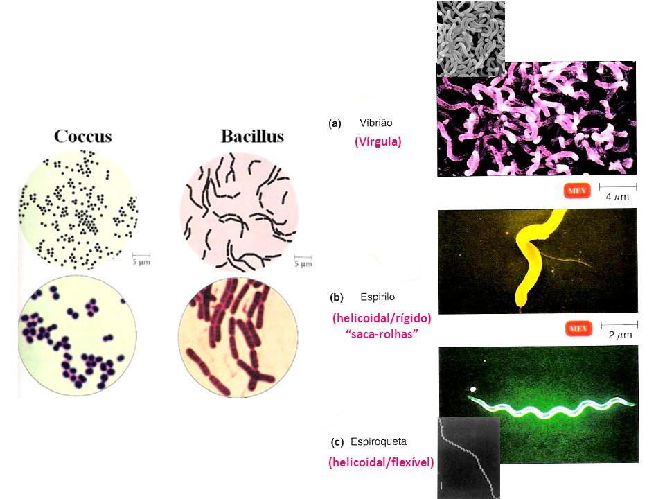 (Vírgula) (helicoidal/rígido) saca-rolhas (helicoidal/flexível)