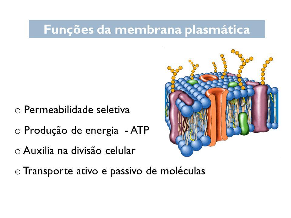 Funções da membrana plasmática o Permeabilidade seletiva o Produção de energia - ATP o Auxilia na divisão celular o Transporte ativo e passivo de molé