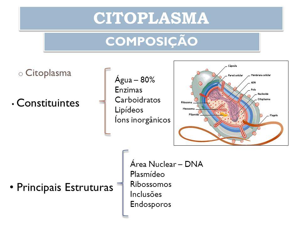 CITOPLASMA COMPOSIÇÃO o Citoplasma Constituintes Água – 80% Enzimas Carboidratos Lipídeos Íons inorgânicos Principais Estruturas Área Nuclear – DNA Pl