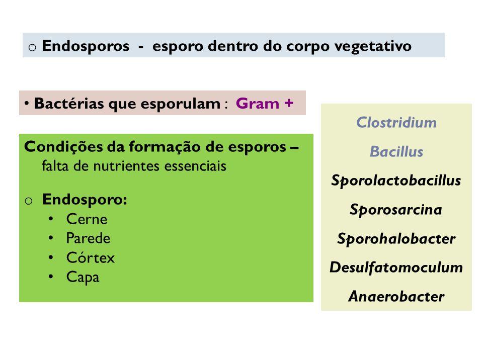 o Endosporos - esporo dentro do corpo vegetativo Bactérias que esporulam : Gram + Clostridium Bacillus Sporolactobacillus Sporosarcina Sporohalobacter