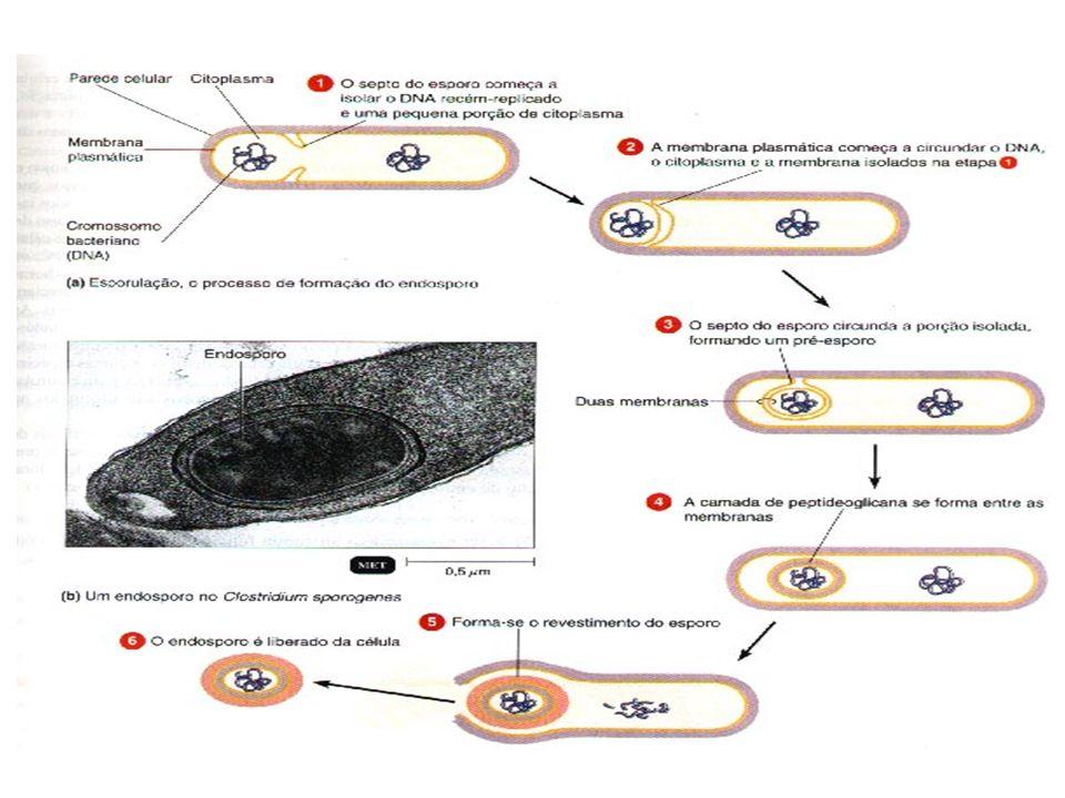 Importância da esporulação nas bactérias...