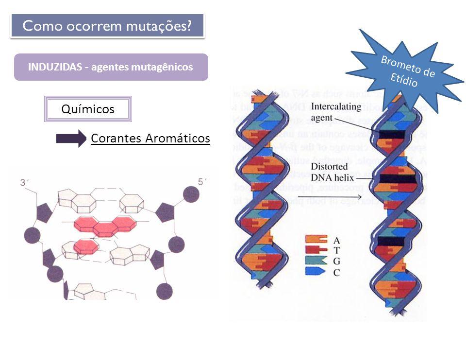 Químicos INDUZIDAS - agentes mutagênicos Corantes Aromáticos Como ocorrem mutações? Brometo de Etídio