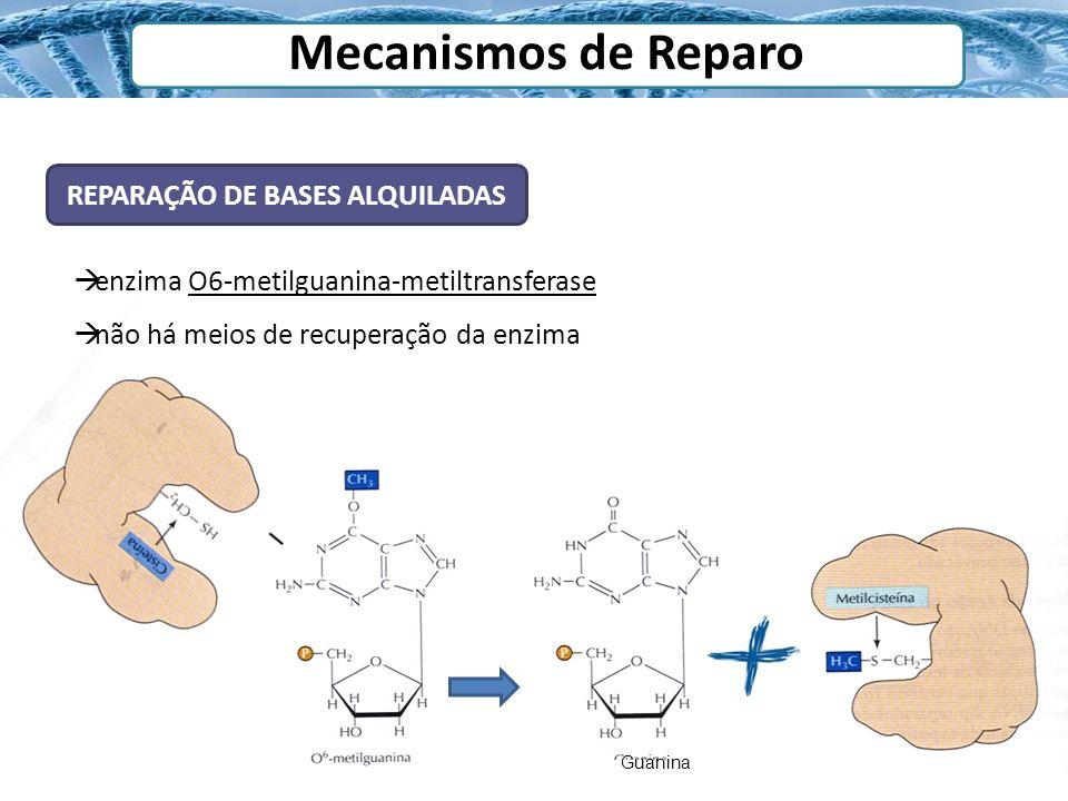 Mecanismos de Reparo REPARAÇÃO DE BASES ALQUILADAS enzima O6-metilguanina-metiltransferase não há meios de recuperação da enzima Guanina