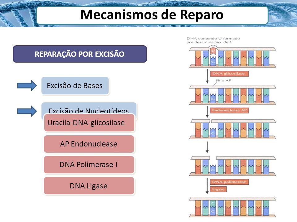 Mecanismos de Reparo REPARAÇÃO POR EXCISÃO Excisão de Bases Excisão de Nucleotídeos Uracila-DNA-glicosilase AP Endonuclease DNA Polimerase I DNA Ligas