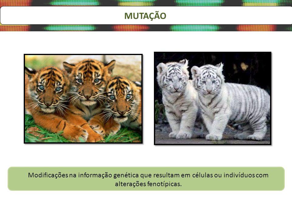 MUTAÇÃO Modificações na informação genética que resultam em células ou indivíduos com alterações fenotípicas.