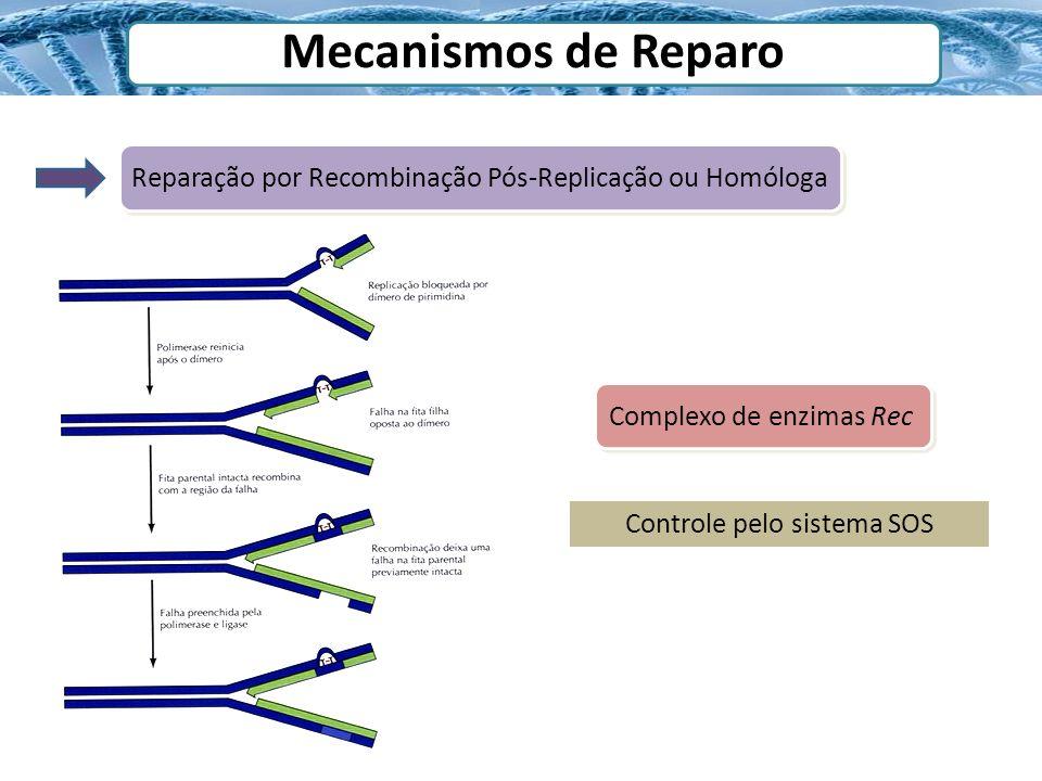 Mecanismos de Reparo Reparação por Recombinação Pós-Replicação ou Homóloga Complexo de enzimas Rec Controle pelo sistema SOS