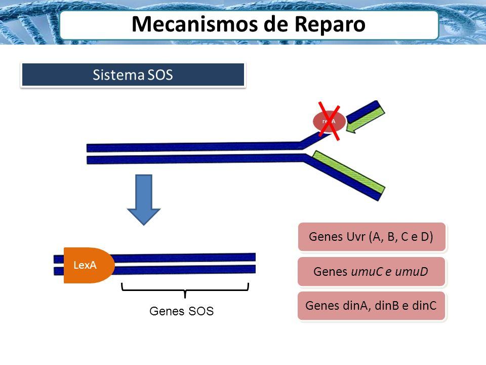 Sistema SOS Mecanismos de Reparo recA LexA Genes SOS Genes Uvr (A, B, C e D) Genes umuC e umuD Genes dinA, dinB e dinC