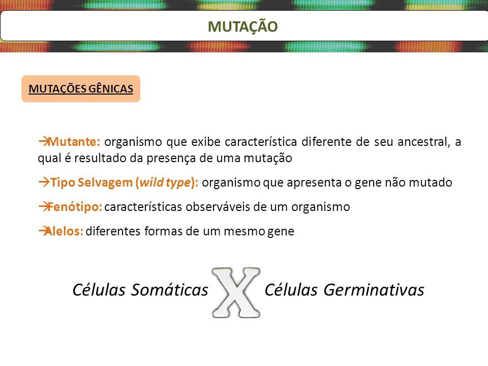 MUTAÇÃO MUTAÇÕES GÊNICAS Mutante: organismo que exibe característica diferente de seu ancestral, a qual é resultado da presença de uma mutação Tipo Se