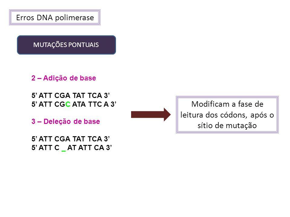 Erros DNA polimerase MUTAÇÕES PONTUAIS 2 – Adição de base 5 ATT CGA TAT TCA 3 C 5 ATT CGC ATA TTC A 3 3 – Deleção de base 5 ATT CGA TAT TCA 3 5 ATT C