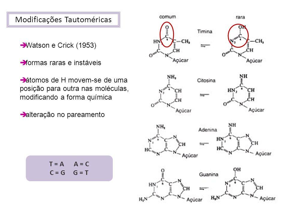 Modificações Tautoméricas Watson e Crick (1953) formas raras e instáveis átomos de H movem-se de uma posição para outra nas moléculas, modificando a f