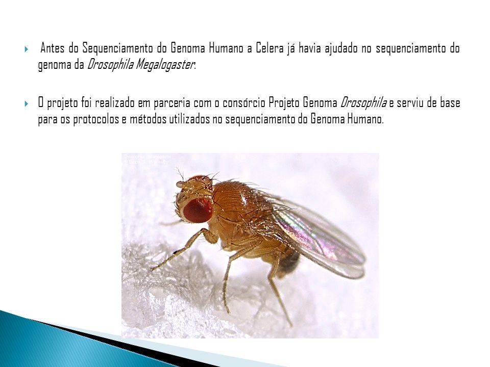 Antes do Sequenciamento do Genoma Humano a Celera já havia ajudado no sequenciamento do genoma da Drosophila Megalogaster. O projeto foi realizado em