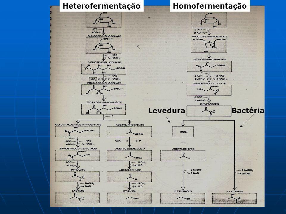 HeterofermentaçãoHomofermentação LeveduraBactéria
