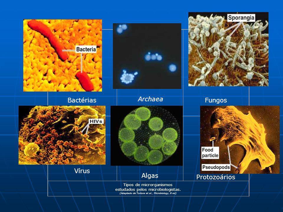 Bactérias Archaea Fungos Vírus Algas Protozoários Tipos de microrganismos estudados pelos microbiologistas. (Adaptado de Tortora et al., Microbiology,
