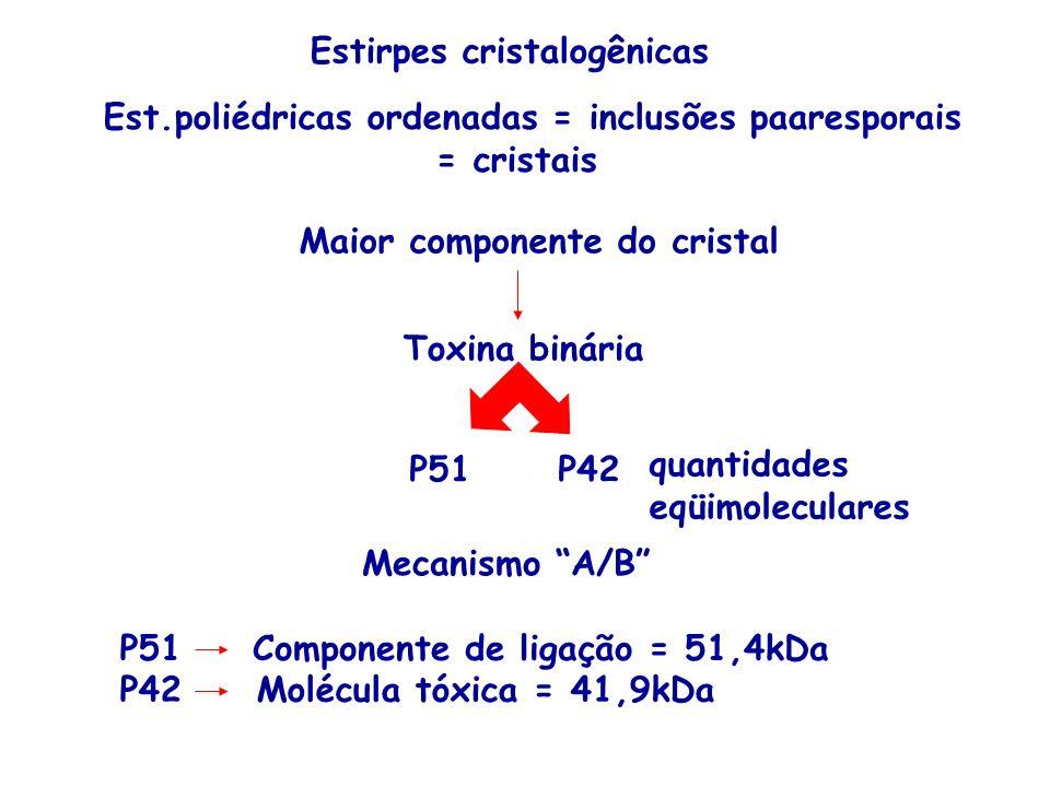 Est.poliédricas ordenadas = inclusões paaresporais = cristais Maior componente do cristal Toxina binária P51P42 quantidades eqüimoleculares P51Compone